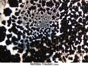 Trauben-NichtBio_S36_200x - Kopie